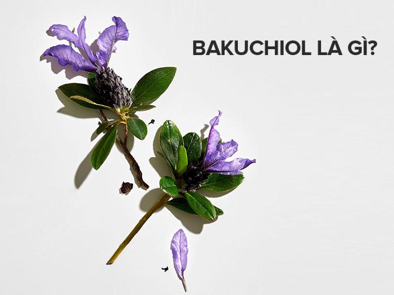 Bakuchio là gì